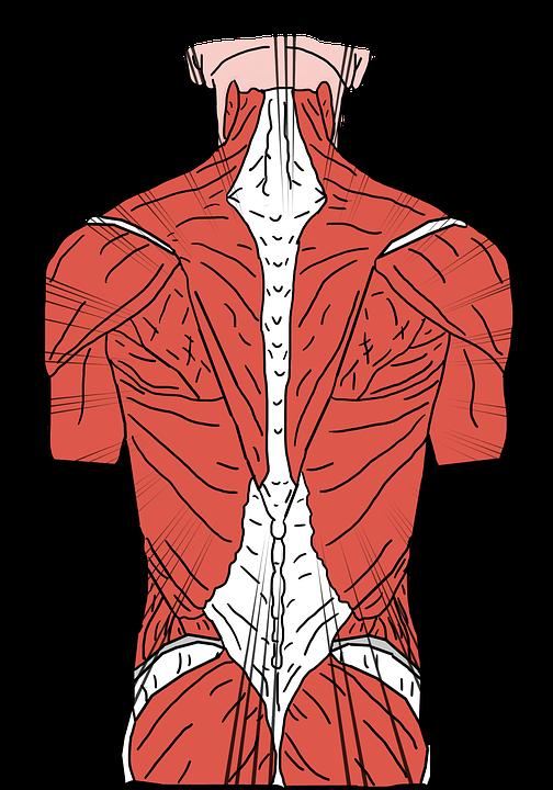 nuo osteochondrozės nėra erekcijos