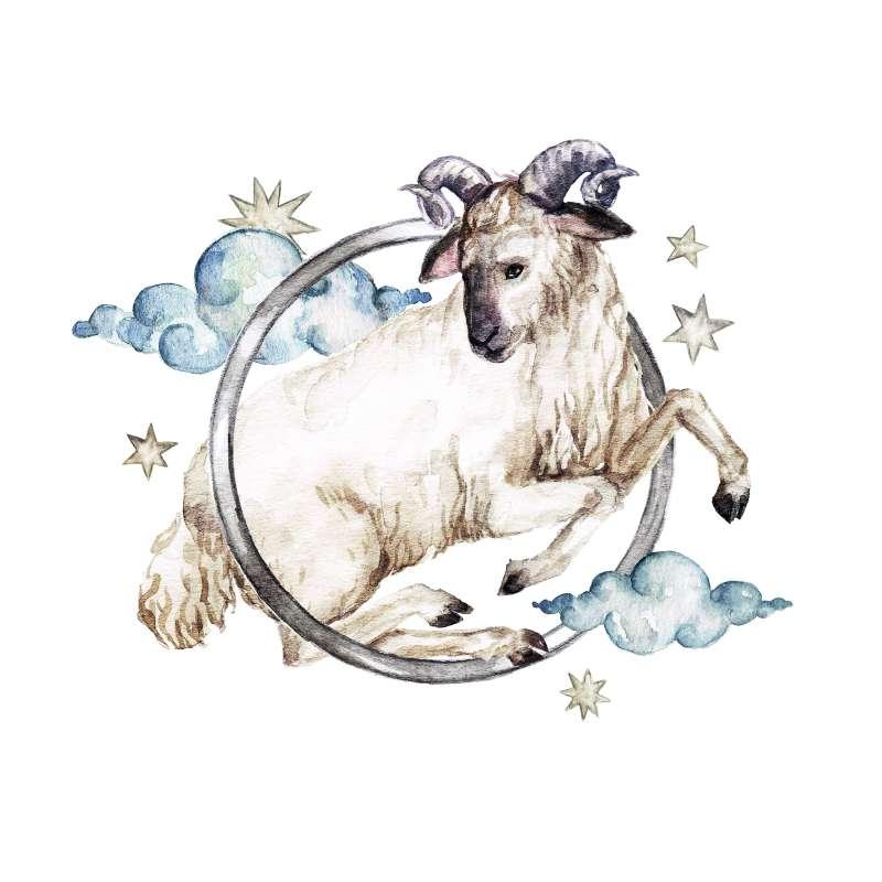 avinas, augintiniai, dėkingumą