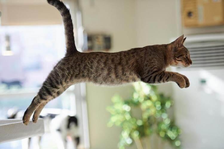 Kačių elgesio pavyzdžiai