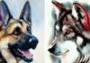 Jūsų zodiako ženklas išduoda į kokį šunį esate panašiausias!