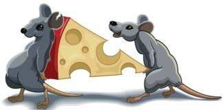 Sužinokite, ko saugotis, kad Žiurkės metai būtų sėkmingi