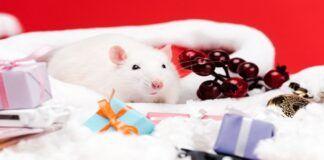 Naujųjų metų horoskopas: kokių pavojų gali atnešti Baltoji žiurkė?