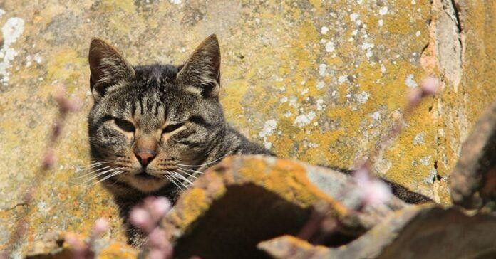 Kačių elgesio pavyzdžiai, kuriuos žmonės turėtų pritaikyti sau