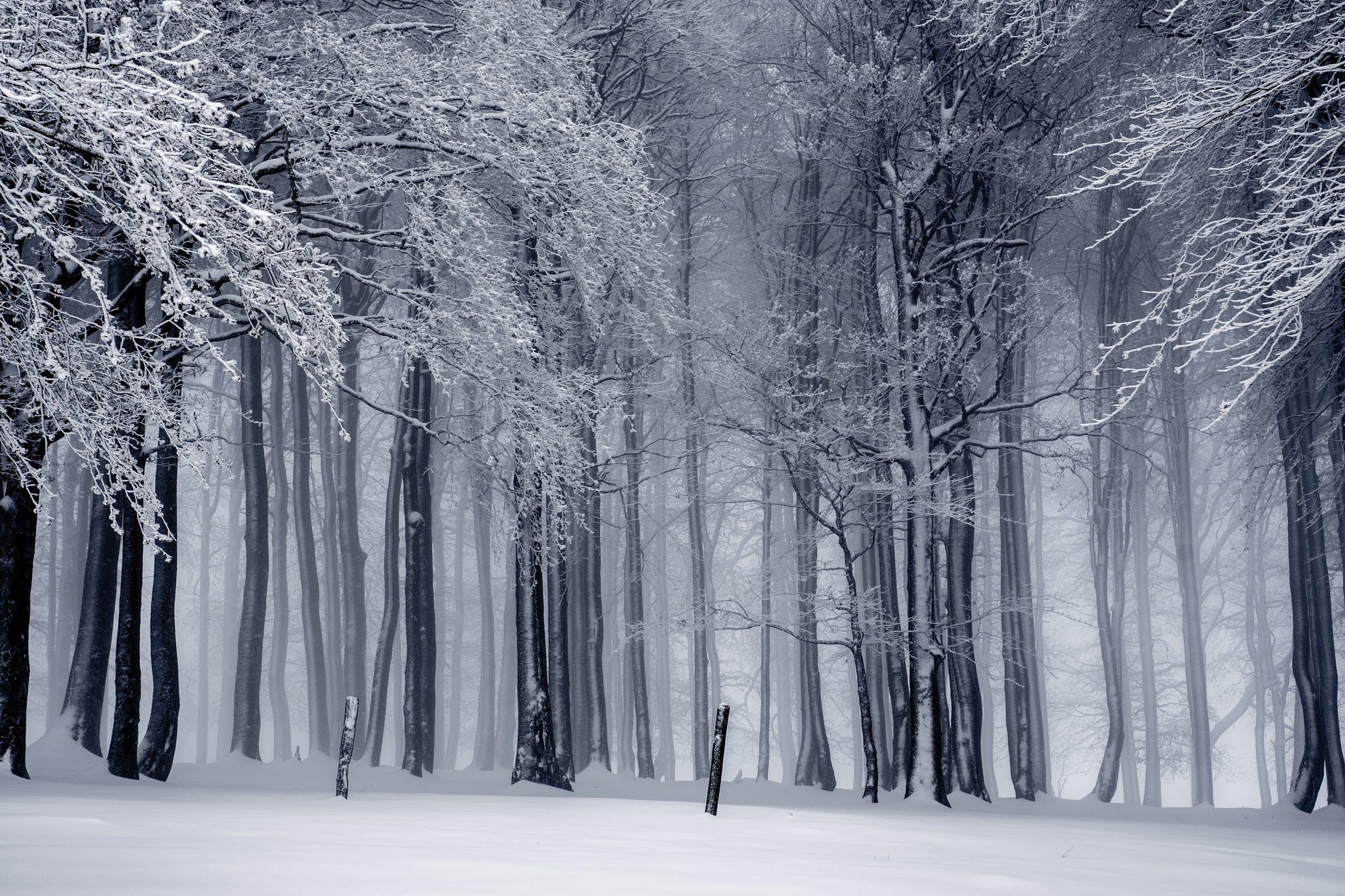 šaltasis sezonas
