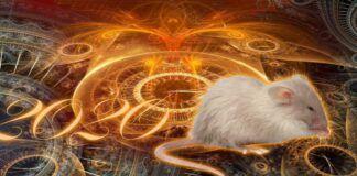Zodiako ženklai, kuriems Žiurkės metais seksis visose gyvenimo srityse