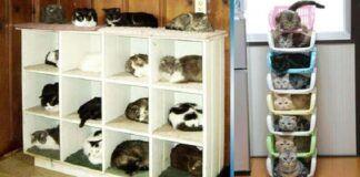 Katės namuose. 15 šmaikščių idėjų, kaip jas laikyti!