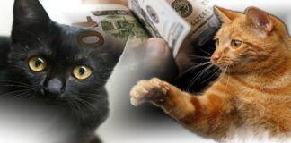 Šmaikštūs patarimai katėms dėl žmogaus priežiūros!