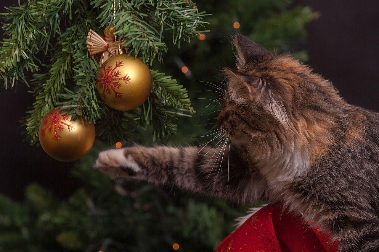 eglutė, katinas, kalėdos