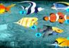 Pasirinkite žuvį ir sužinokite, kas laukia ateinančią savaitę