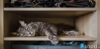 Kodėl katės mėgsta lysti į spinteles ir stalčius? Sužinokite!