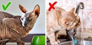 Plačiai paplitę faktai apie kates, sužinokite ar visi jie teisingi!