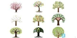 Testas: pasirinktas medis atskleis, koks jūsų bruožas yra dominuojantis