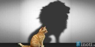 Psichologinės gudrybės, kaip padidinti pasitikėjimą savimi