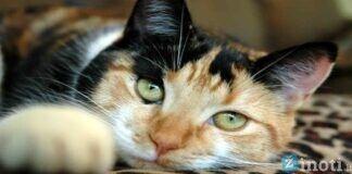 Kaip elgiasi katės, kai nori perspėti, jog namuose tvyro bloga energija?
