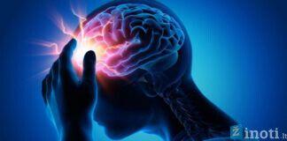 Smegenys ir patys įdomiausi faktai apie jas. Sužinokite!