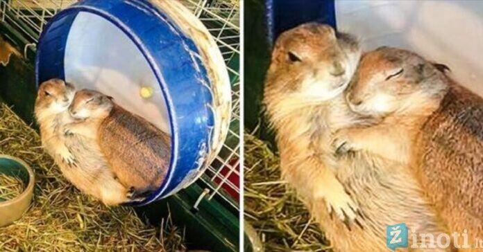 Gyvūnų meilės apraiškos. Ištirpdys kiekvieno širdį!
