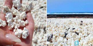Kukurūzų spragėsių paplūdimys Kanarų salose. Kodėl jis egzistuoja?