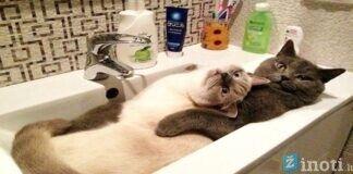 Pačios juokingiausios ir žaviausios katės. Gera nuotaika garantuota!
