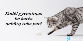 Naminės katės pareigos ir prievolės arba kodėl žmogus be jos neapsieitų