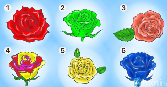 Pasirinkite rožę ir sužinokite geriausias savo charakterio savybes
