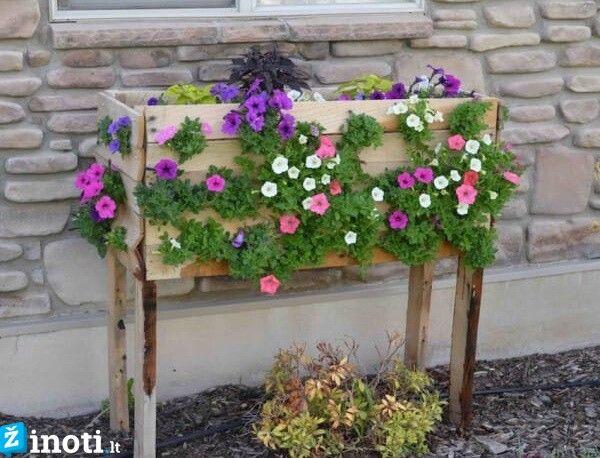 Gėlių vazonas