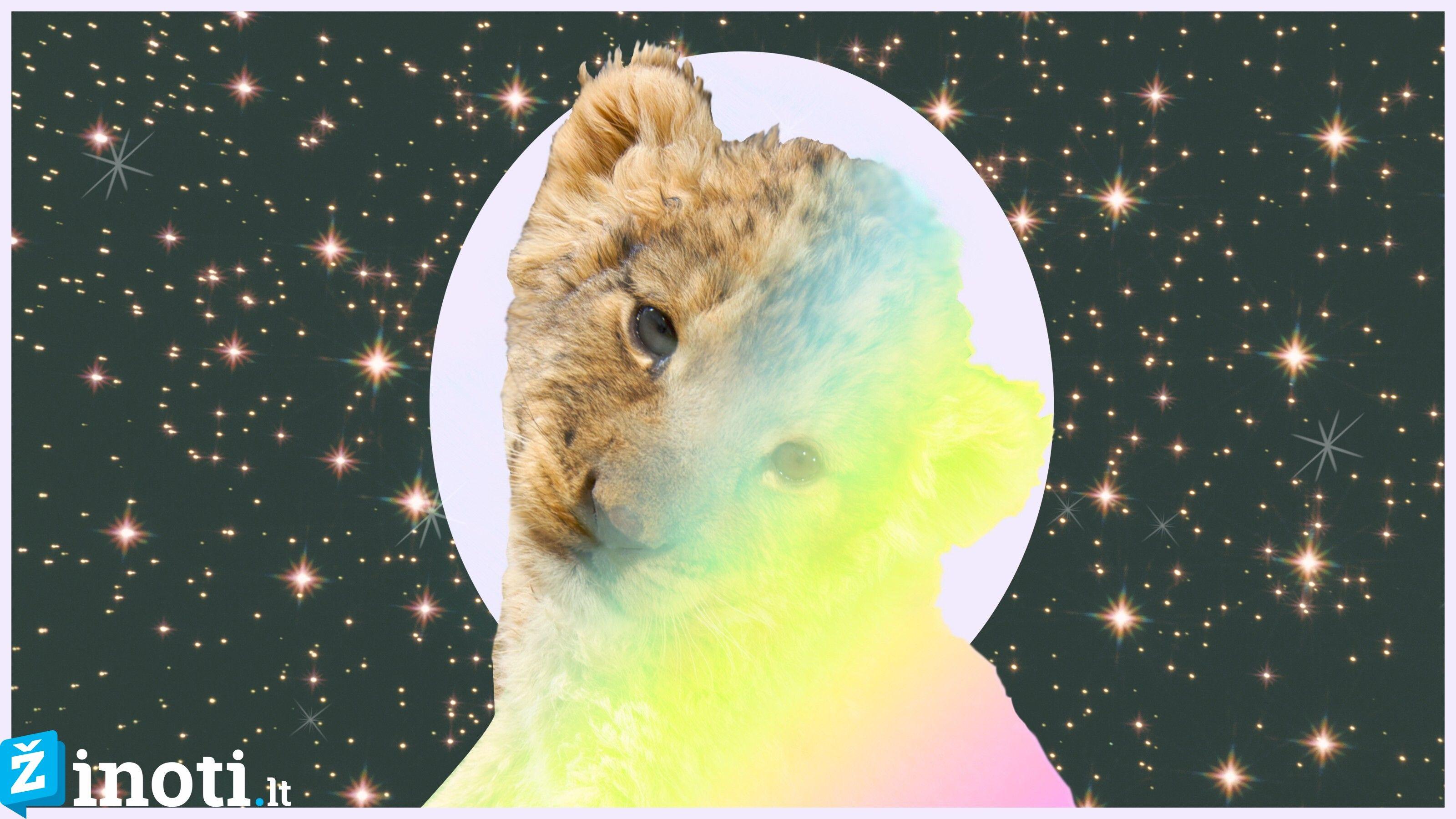 liūtas, savaitės horoskopas