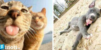 Žavingiausių gyvūnų fotografijos! Ar ir jūsų augintinis mėgsta pozuoti?