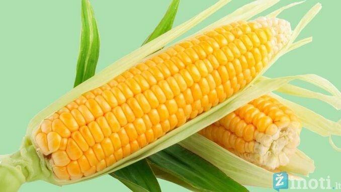 Kukurūzų nauda numetus svorio, 10 užkandžių smaližiams, norintiems numesti svorio - DELFI FIT