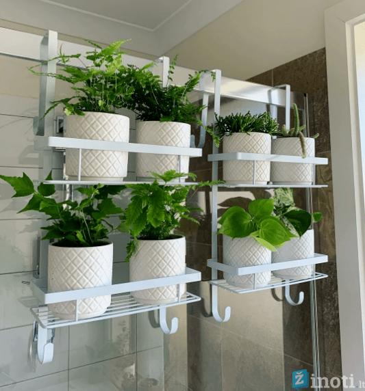 augalų laikikliai