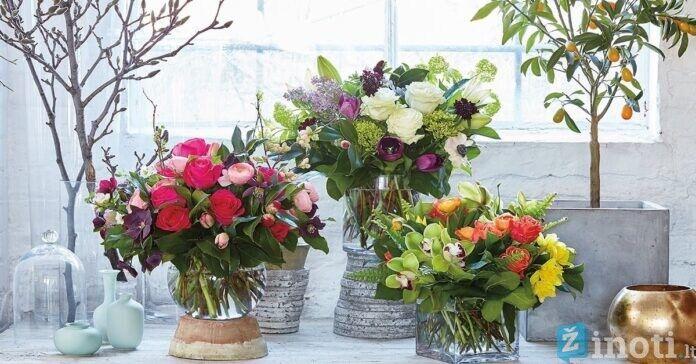 Išskirtiniai augalų laikikliai. Papuoškite namus žaluma!