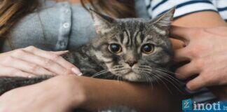 Kodėl katinas kartu su jumis nuolat nežiūri televizoriaus?