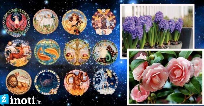 Augalai, atnešantys sėkmę skirtingiems Zodiako ženklams