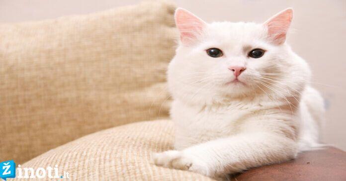 Kačių magija: kaip šie augintiniai apsaugo mus nuo negandų?