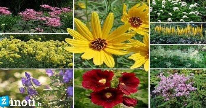 Žydintys augalai, kuriais šį pavasarį privalote papuošti savo sodą!
