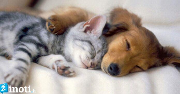 Kačių ir šunų draugystė, užfiksuota nuotraukose. Tik pažiūrėkite!