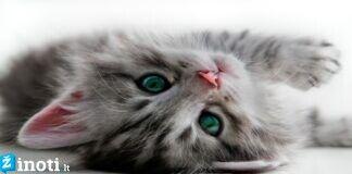 Sužinokite, kodėl mokslininkai visiems rekomenduoja laikyti katę