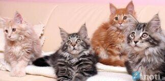 Kaip katės kailio spalva gali paveikti jos savininko likimą?