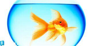 Akvariumo žuvytės, kuriomis gali pasirūpinti net vaikas