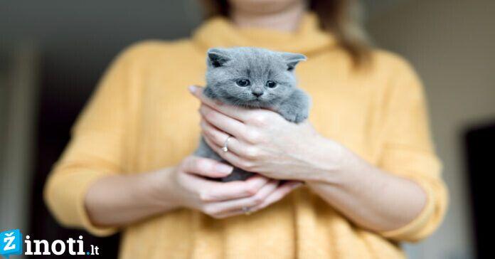 Kodėl katės savo šeimininkus suvokia, kaip savo tėvus?