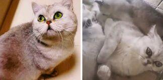 Uhane katė 40 dienų gyveno viena namuose - šeimininkai gulėjo ligoninėje