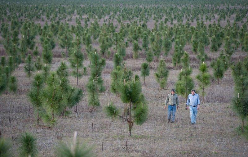 medžių