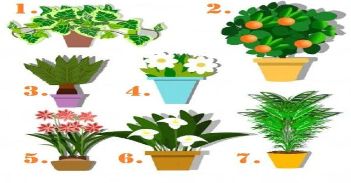 Testas: pasirinktas augalas atskleis didžiausią jūsų talentą