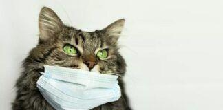 Koronavirusas ir naminiai gyvūnai: ar jie gali užsikrėsti?