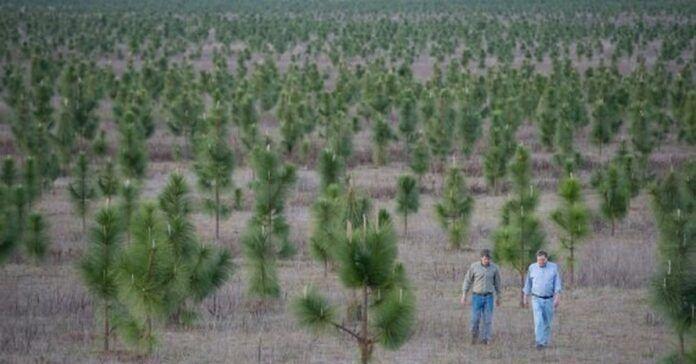 Vyras pasodino 8 milijonus medžių, kad atkurtų mišką, kuris buvo iškirstas
