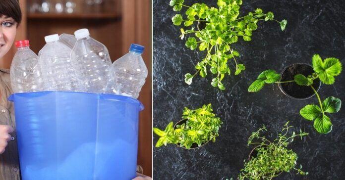 Norint sudaiginti augalus jums prireiks tik šiek tiek žemių ir plastikinio indo