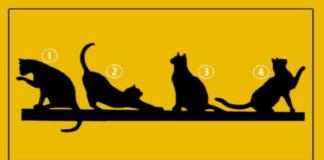 Pasirinkite katę ir sužinokite, koks jūsų gyvenimo tikslas!