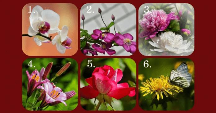 Testas: pasirinkite gėlę ir ji atskleis, koks jūsų charakteris