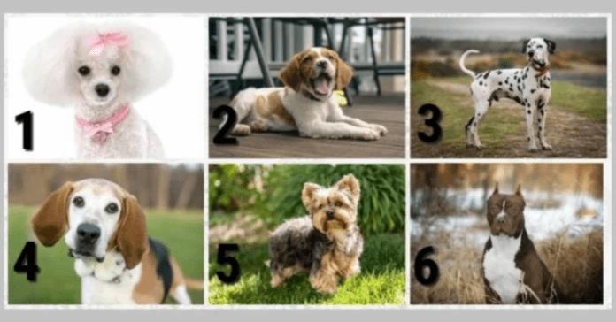 Testas: išsirinkite šunį ir sužinokite, ką jis atskleidžia apie jūsų charakterį