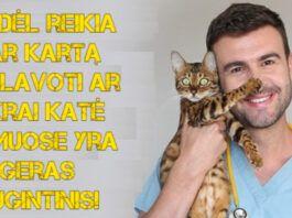 Priežastys, kodėl verta dar kartą apgalvoti katės auginimą namuose!