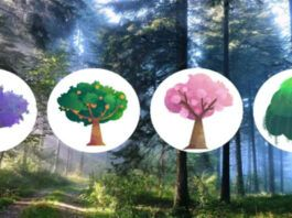 Pasirinkite medį ir sužinokite, kas esate - optimistas ar pesimistas